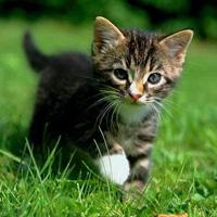 Identification des chats