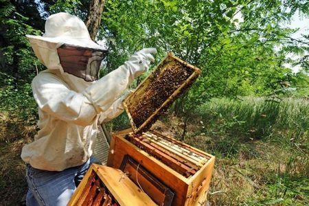 Le ministère de l'Agriculture s'est prononcé vendredi pour l'interdiction du pesticide Cruiser du groupe suisse Syngenta utilisé pour le colza et suspecté d'accroître la mortalité des abeilles. Photo : AFP/R. Gabalda
