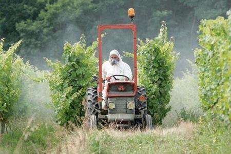 La vigne, sensible aux maladies, est une grande consommatrice de produits phytosanitaires.