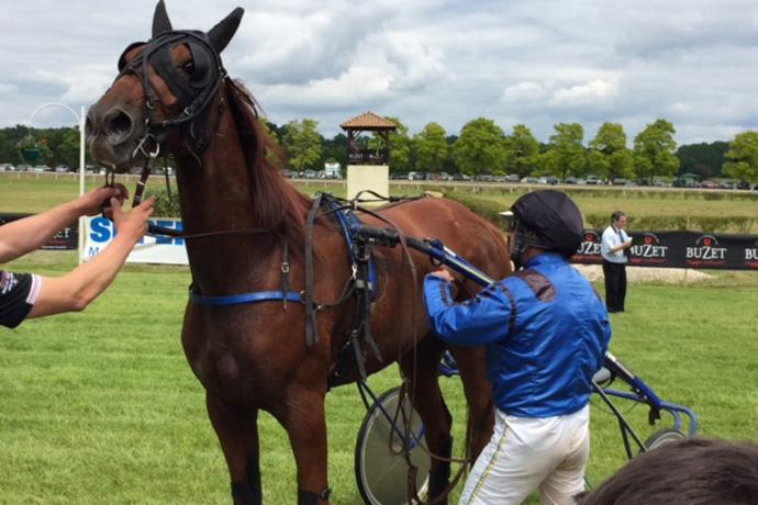 Courses de chevaux à Luxé. Photo : N. Bonnefoy